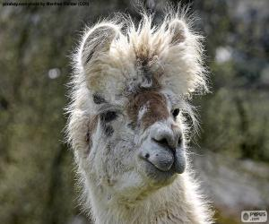 puzzel Lama, hoofd