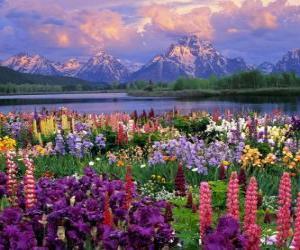 puzzel Landschap in het voorjaar van