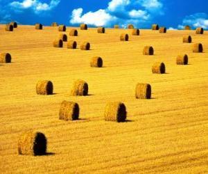 puzzel Landschap van het gebied in de zomer
