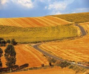 puzzel Landschap van rollend velden