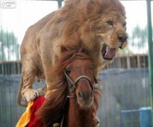 puzzel Leeuw en paard doen hun circusvoorstelling