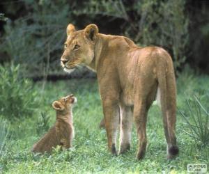 puzzel Leeuwin met haar baby