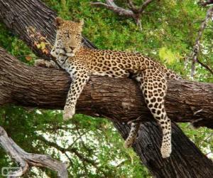 puzzel Leopard rusten