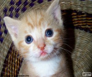 puzzel Leuk Kitten