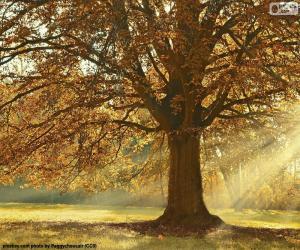 puzzel Loofboom in de herfst