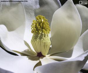 puzzel Magnolia Bloem