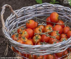 puzzel Mandje van tomaten