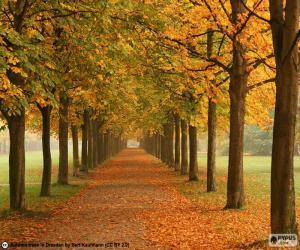 puzzel Manier onder bomen in de herfst