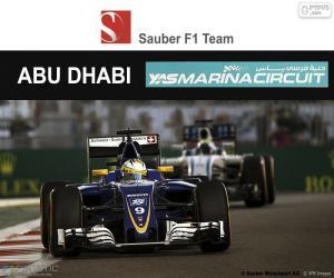 puzzel Marcus Ericsson, Grand Prix van Abu Dhabi 2016
