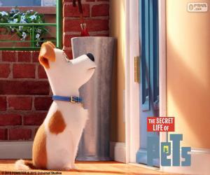 puzzel Max voor de deur