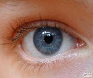 puzzel Menselijk oog