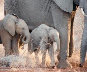 puzzel Moeder beheersing van de kleine olifant