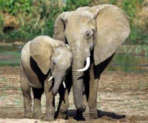 puzzel Moeder het regelen van de kleine olifant met de hulp van haar romp