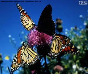 puzzel Monarchvlinder