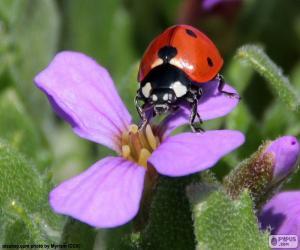 puzzel Mooie Ladybug