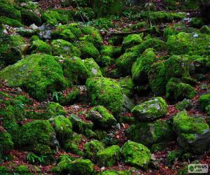 puzzel Mos bedekte stenen
