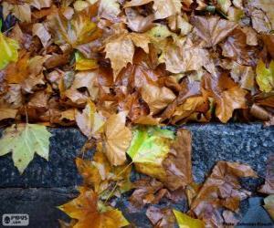 puzzel Natte bladeren