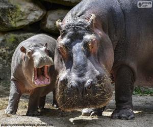 puzzel Nijlpaard naast zijn kalf