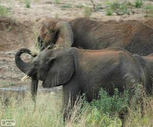 puzzel Olifanten eten kruiden