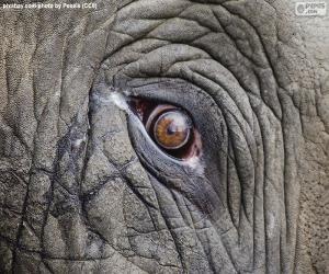 puzzel Oog van de olifant