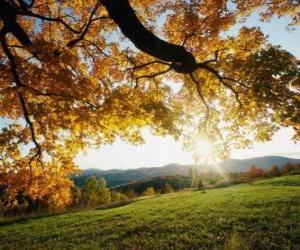 puzzel Opvolging van de glooiende heuvels met enkele bomen