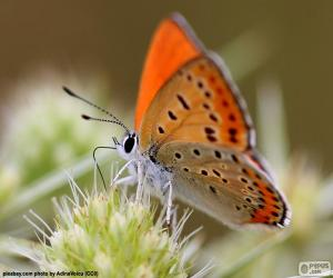 puzzel Oranje vlinder