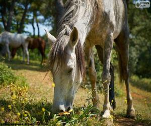 puzzel Paard begrazing