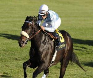 puzzel Paard en jockey op een paard race op het circuit