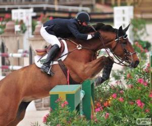 puzzel Paard en ruiter het passeren van een obstakel in een springen wedstrijd