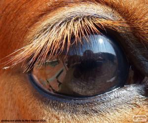 puzzel Paard oog