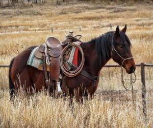 puzzel Paard van een cowboy