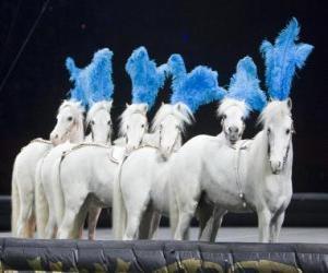 puzzel Paarden die in een circus