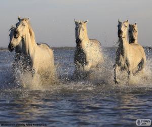 puzzel Paarden in water