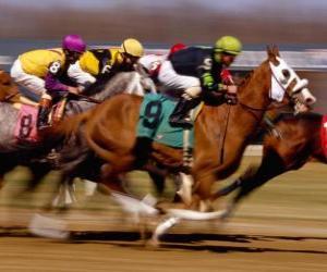 puzzel Paardensport - Paard het rennen op de renbaan