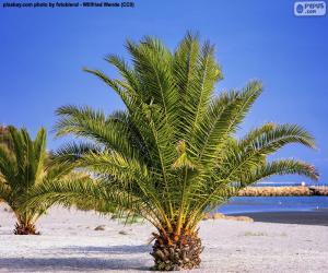 puzzel Palmbomen op het strand