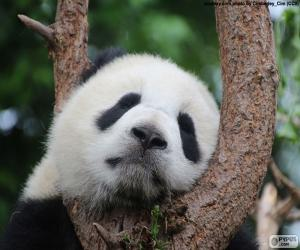 puzzel Panda slapen