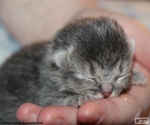 puzzel Pasgeboren kat
