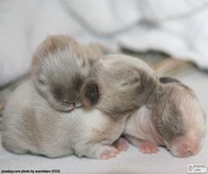 puzzel Pasgeboren konijnen
