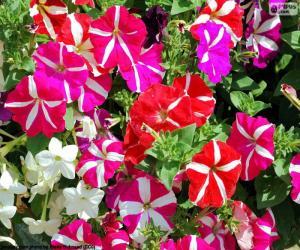 puzzel Petunia bloemen