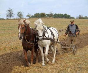 puzzel Ploegen met paarden effent