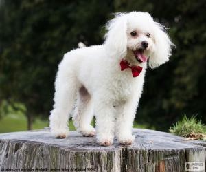 puzzel Poedel pup