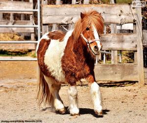 puzzel Pony