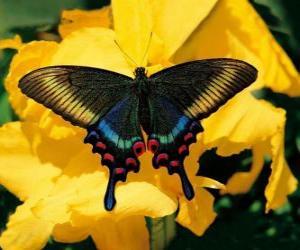 puzzel Prachtige vlinder op een gele bloem