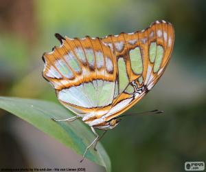 puzzel Prachtige vlinder