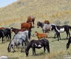 Kudde van wilde paarden