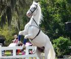 Gefokt wit paard