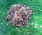 Verzamelen afgevallen bladeren