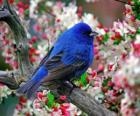 Vogel blauw