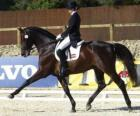 Paard en ruiter het uitvoeren van een oefening dressuur
