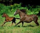 Paard en veulen troting door de prairie
